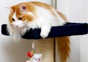 禽流感可以养猫吗?禽流感期间能养猫吗?