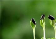 春季养生要点 春季养生的方法