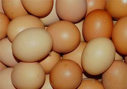 惊蛰要吃鸡蛋吗?惊蛰为什么要吃鸡蛋?