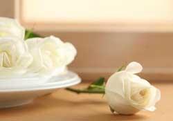 白色情人节送什么花?白色情人节送白玫瑰合适吗?