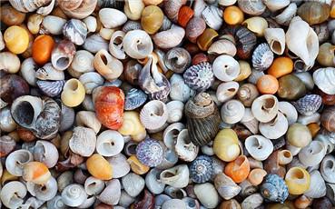 冰镇花螺的做法 简单又美味