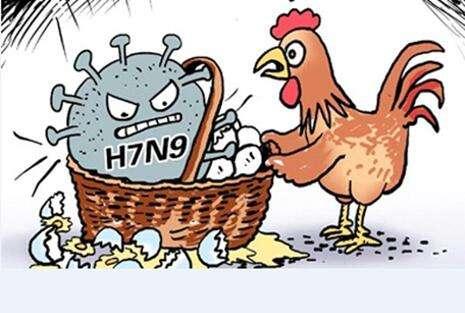 怎样预防禽流感?如何预防禽流感