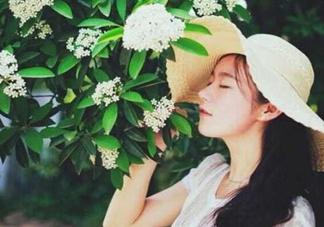 石楠花为什么污?石楠花是什么梗?