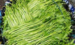 香芹和芹菜的营养区别图片