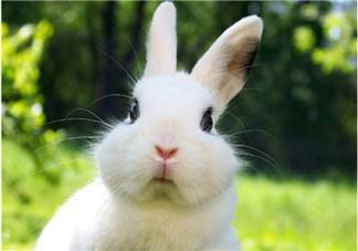 孕妇能吃兔子肉吗?孕妇可以吃兔子肉吗?