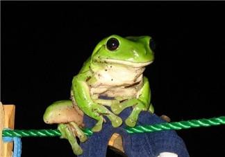 孕妇能吃青蛙吗?孕妇可以吃青蛙吗?