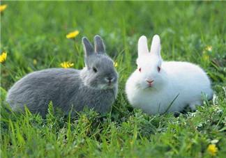 孕妇能吃兔头吗?孕妇能不能吃兔头?