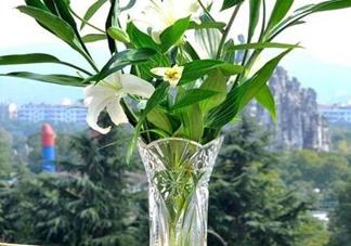 富贵竹有几个品种?富贵竹有种子吗?