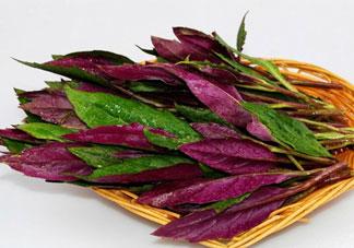 红背菜不能什么一起吃?红背菜和什么食物相克?