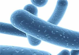 益生菌哪个牌子好?哪个牌子的益生菌好?