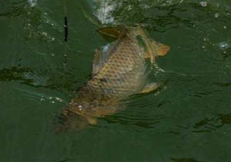 谷雨好钓鱼吗?谷雨钓鱼用什么饵料?