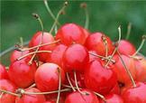 樱桃用塑料袋装好吗?樱桃用什么装不容易坏?