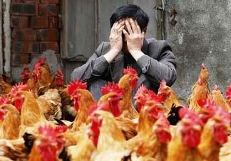 五月份还有禽流感吗?禽流感几月份结束?