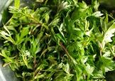 艾叶是什么植物?艾叶和艾草是一回事吗?