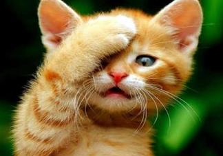被猫抓伤会得狂犬病吗?被猫咬了会得狂犬病吗