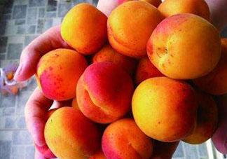 杏和荔枝能一起吃吗?杏和荔枝一起吃会中毒吗?