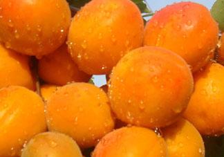 杏和榴莲能一起吃吗?榴莲和杏能一起吃吗?