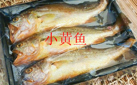 钓黄颡鱼用什么打窝 牛羊骨头或鸡鸭肝脏