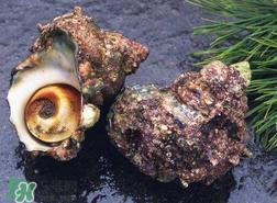 海螺怎样吃才正确图解?海螺哪里不能吃图示