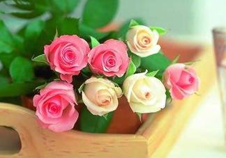 父亲节可以送花吗?父亲节送什么花最合适?
