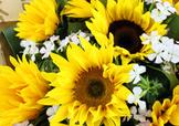 父亲节可以送向日葵吗?父亲节送向日葵好吗?
