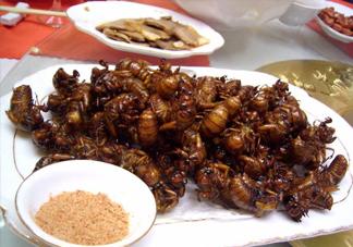 蝉蛹里面黑色的能吃吗?蝉蛹是怎么形成的