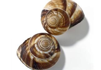 田螺是发物吗?田螺是海鲜吗