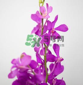 鲜花怎么保存时间长 鲜花怎么保鲜