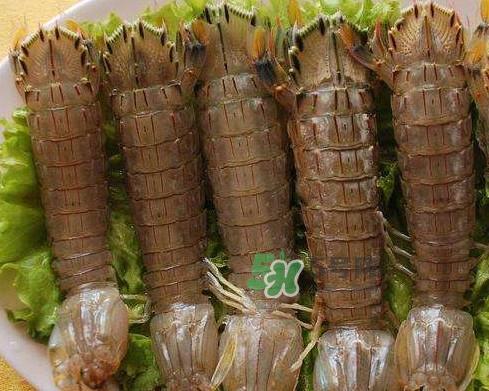 虾蛄是皮皮虾吗?虾蛄和皮皮虾的区别