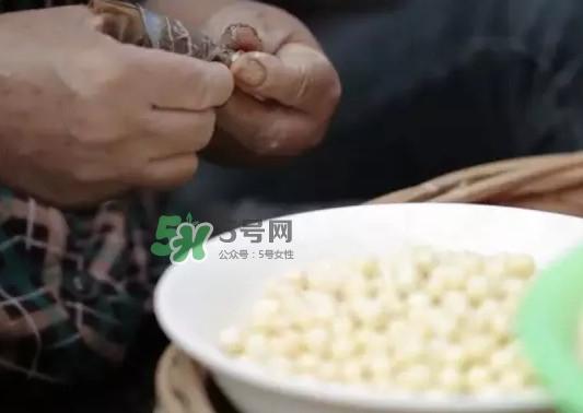 鸡头米是什么?鸡头米是芡实吗
