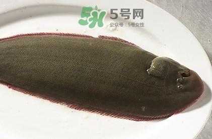 活的龙利鱼怎么保存?新鲜龙利鱼能放多久