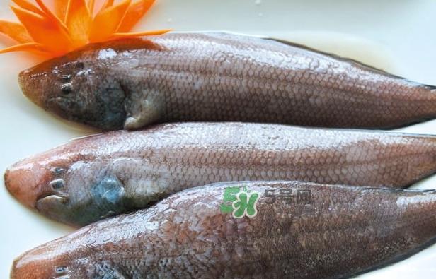 龙利鱼是发物吗?怀孕能不能吃龙利鱼
