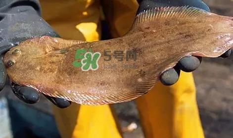 龙利鱼是淡水鱼吗?龙利鱼是巴沙鱼吗