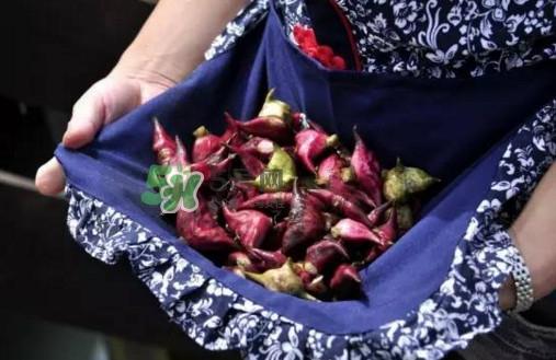 红菱是什么水果?胃不好可以吃红菱吗