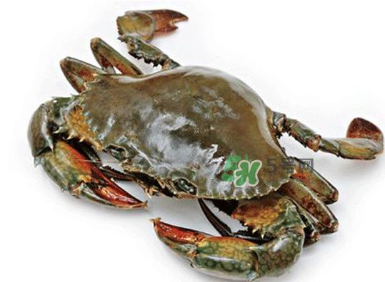 青蟹能放几天?青蟹能活多久?