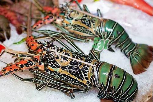 七彩神虾吃什么?七彩神虾怎么养?