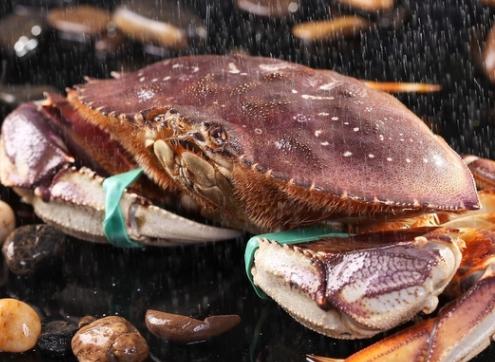 太子蟹多少钱一斤?太子蟹多少钱一只?