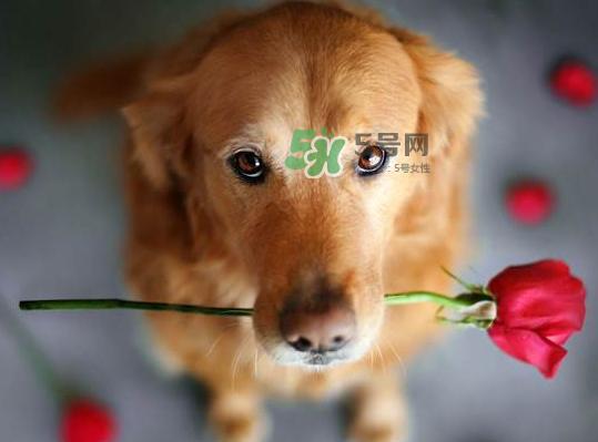 七夕可以提前送花吗?七夕节提前几天送花好?