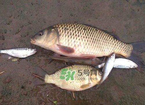 八月份钓鱼用什么料好?八月份钓什么鱼?