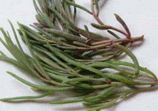 海英菜的营养价值_海英菜的功效与作用及食用方法