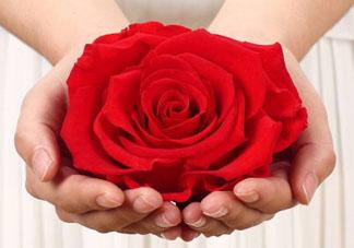 送永生花代表什么?一个男孩送自己永生花是什么意思?