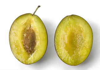 西梅是李子吗?西梅是什么季节的水果