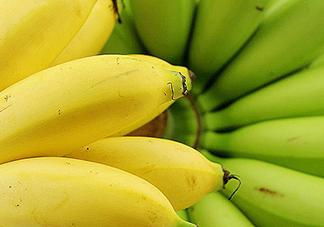 帝王蕉的热量 吃帝王蕉会长胖吗