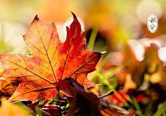 秋分是秋天到了吗_秋分开始入秋了吗_秋分是秋天开始吗