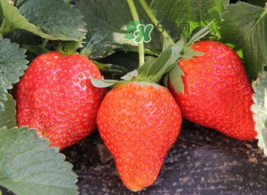 九月份可以种草莓吗?九月份有草莓吃吗?