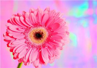 秋天开花吗?秋天的花有哪些?