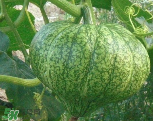 九月份可以种南瓜吗 南瓜九月份还能种吗