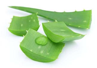 敏感肌能使用芦荟护肤吗?芦荟胶有什么用?