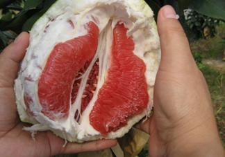 红肉蜜柚可以储存多久?红肉蜜柚怎么挑选