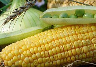 玉米和葡萄可以一起吃吗?玉米葡萄的做法